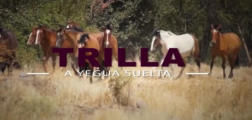 Trilla a Yegua suelta | Una tradición que no muere